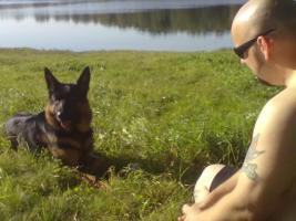 einen deutschen schäferhund 2 jahre alt Kostenlos in gute hände*