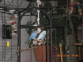 Foto 4 einen vogelkäfig
