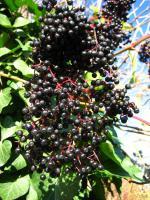 Foto 6 einheimische Naturkost direkt vom Erzeuger: leckere Fruchtaufstriche mit hohem Fruchtanteil
