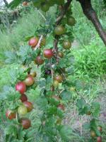 Foto 7 einheimische Naturkost direkt vom Erzeuger: leckere Fruchtaufstriche mit hohem Fruchtanteil
