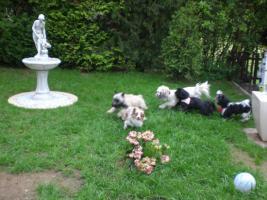 Foto 2 familiäre Hundepension nur für kleine Rassen (bis 35 cm)