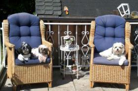 Foto 3 familiäre Hundepension nur für kleine Rassen (bis 35 cm)