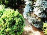Foto 7 freistehendes Ein- bzw. Zweifamilienhaus in Andernach Innenstadtn�he zu verkaufen