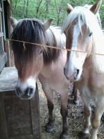 freundinnen aufgepasst , Rb auf zwei ponys
