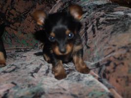 Foto 4 gebe ab mitte februar 5 kleine mischlingshunde ab.