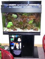 Foto 2 gebrauchtes Meerwasseraquarium komplett abzugeben
