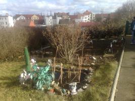 Foto 2 gepflegter Pachtgarten in 06114 Halle-Trotha mit Pool