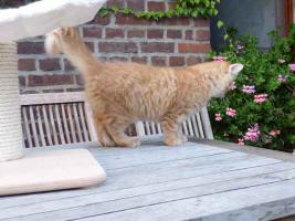 Foto 5 goldiger kleiner  Kater sucht sein neues zu Hause