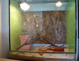 großes Glasterrarium zu verkaufen!