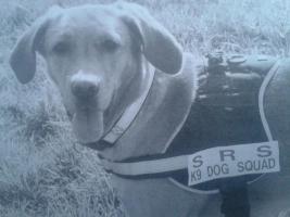 Foto 2 hündin loki labrador vermisst , seid sept 2012 in Bochum abgegeben