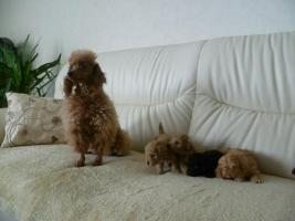 Foto 3 hund