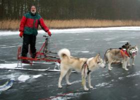"""Foto 2 husky malamute 4 - Rad trainingswagen/-schlitten entwickelt von """"Huskyfarm"""""""