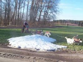 """Foto 3 husky malamute 4 - Rad trainingswagen/-schlitten entwickelt von """"Huskyfarm"""""""