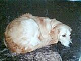 Foto 3 ich suche für mein Hund ein (Goldenen Retriever ) Hündin, ein neues zu Hause