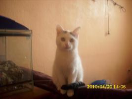 ich suchen für eine junge katze ein neues liebevolles zuhause