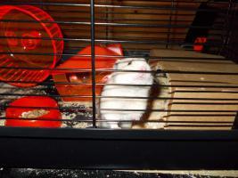 ich verkaufe mein hamster sammy