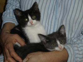 Foto 2 junge Kätzchen