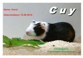 junge peruanische Riesenmeerschweinchen ( CUY )