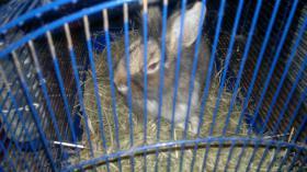 Foto 2 kaninchen junge  braun
