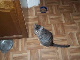 Foto 12 katzen im alter von 6 wochen 8 wochen und ein jahr