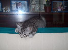 Foto 13 katzen im alter von 6 wochen 8 wochen und ein jahr