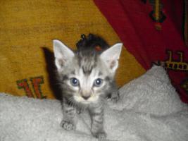Foto 2 katzenbabys abzugeben