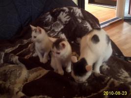 katzenbabys mit mama abzugeben