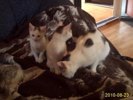 Foto 2 katzenbabys mit mama abzugeben