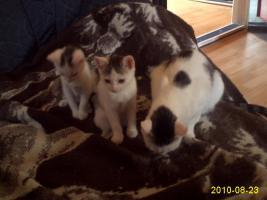 Foto 3 katzenbabys mit mama abzugeben
