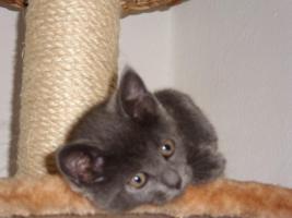 Foto 2 katzenkind sucht liebevolles zuhause, ,, ,