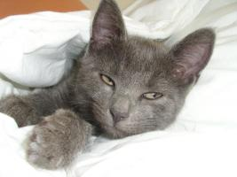 Foto 6 katzenkind sucht liebevolles zuhause, ,, ,