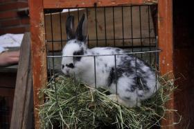 Foto 4 kleine Kaninchen abzugeben