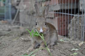 Foto 5 kleine Kaninchen abzugeben