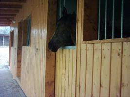 Foto 2 kleine Ponnyranch sucht neue Bewohner