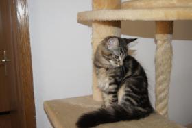 Foto 2 kleine Waldkatzentrolle suchen neue Dosis