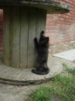 kleine schwarze Kätzchen abzugeben