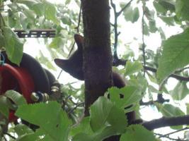 Foto 2 kleine schwarze Kätzchen abzugeben