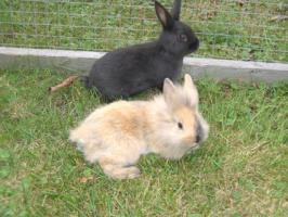 kleine süße Kanninchen suchen ein Zuhause