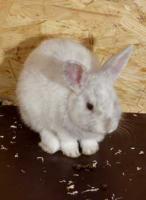Foto 2 kleine süße Kanninchen suchen ein Zuhause