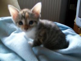 kleine s�sse katzenbabys abzugeben.