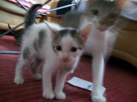 Foto 2 kleine s�sse katzenbabys abzugeben.