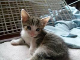 Foto 3 kleine s�sse katzenbabys abzugeben.