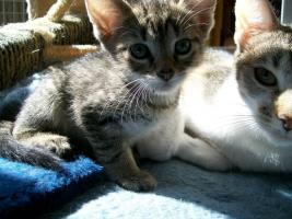 Foto 4 kleine s�sse katzenbabys abzugeben.
