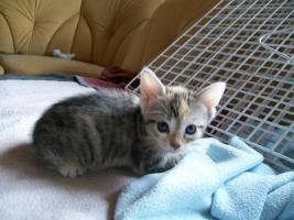 Foto 5 kleine s�sse katzenbabys abzugeben.