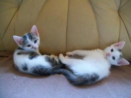 Foto 6 kleine s�sse katzenbabys abzugeben.