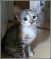 Foto 7 kleine s�sse katzenbabys abzugeben.
