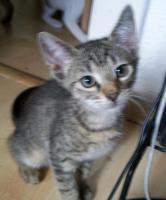 Foto 8 kleine s�sse katzenbabys abzugeben.