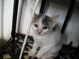 Foto 9 kleine s�sse katzenbabys abzugeben.