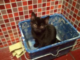 kleines Kätzchen sucht neues Zuhause