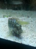 Foto 4 kompl. Meerwasserinhalt oder kompl. Tiere (keine Technik)